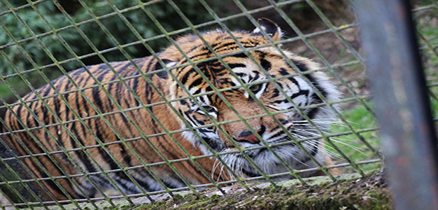 Animal_Welfare_USDA_Files