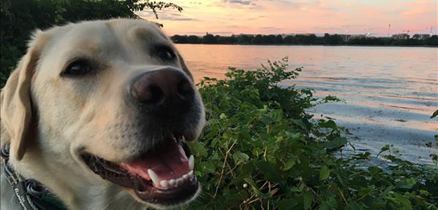 ICYMI: Interior Department Becomes First Dog Friendly Federal Agency…