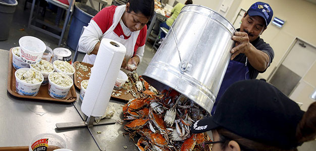 Maryland_Crab_workers