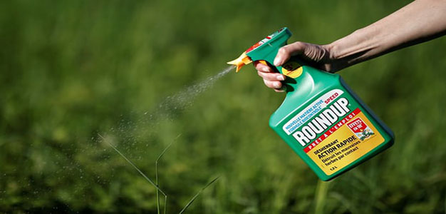 Jury Finds Monsanto Must Pay $289 Million in Roundup Cancer Trial…