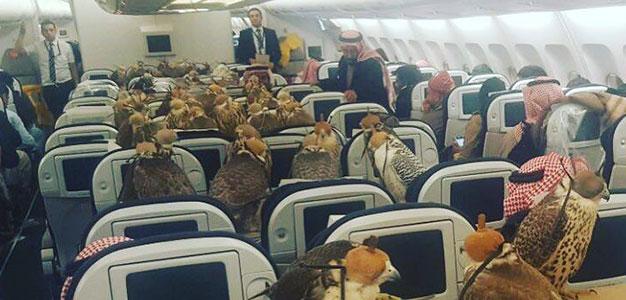 Saudi_Buys_80_Seats_for_Falcons_Lenisoo_Reddit