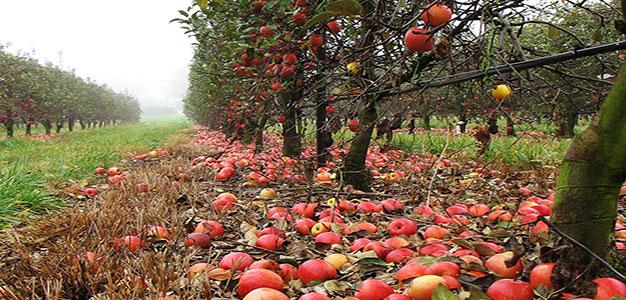 orchard_jennifer_boyer
